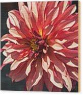 Single Red Bloom Wood Print