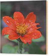 Single Red Flower For A Cure Wood Print