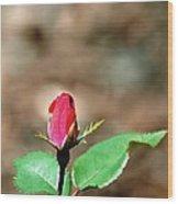 Single Rosebud Abstract Wood Print