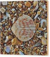 Single Shell Hatteras Island 17 9/3 Wood Print