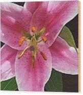 Single Stargazer Lily Wood Print