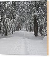Single Track Cross Country Skiing Trail Yosemite National Park Wood Print