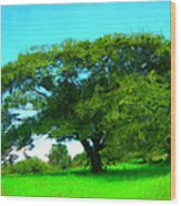 Single Tree In Spring Wood Print