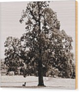 Single Tree Journey Wood Print
