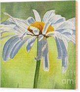 Single White Daisy Blossom Wood Print by Sharon Freeman