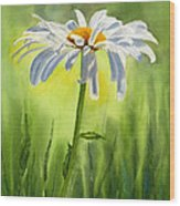 Single White Daisy  Wood Print