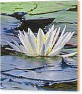 Single White Lotus Wood Print