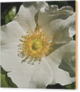 Single White Rose Db Wood Print