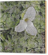 Single White Trillium Wood Print