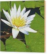 Single White Water Lily Wood Print