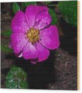 Single Wild Rose Wood Print
