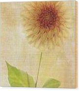 Single Yellow Dahlia Wood Print