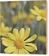 Single Yellow Daisy Wood Print