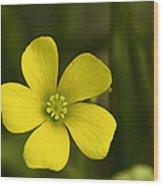 Single Yellow Flower Wood Print by John Holloway