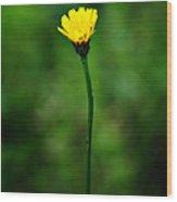 Single Yellow Flower Wood Print by Stephanie Grooms