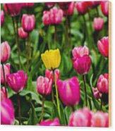 Single Yellow Tulip Wood Print