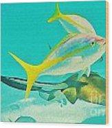 Singray City Cayman Islands Three Wood Print