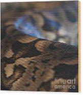 Sinti Hilha - 2 Wood Print