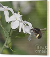 Sipping Nectar Wood Print
