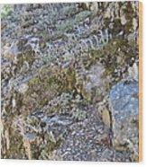 Siskiyou Sedums Wood Print