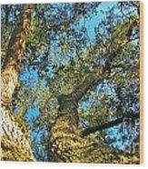 Sister Oaks Wood Print