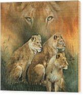 Sisterhood Of The Lions Wood Print