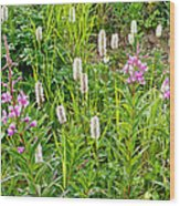 Sitka Burnet And Tall Fireweed In Katmai National Preserve-ak Wood Print