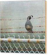Sittin' On The Fence Wood Print