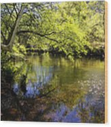 Sitting By The Creek  Wood Print
