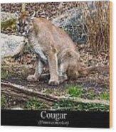 sitting Cougar Wood Print