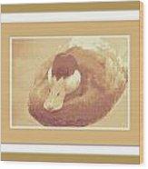 Sitting Duck Wood Print