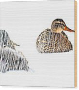 Sitting Ducks In A Blizzard Wood Print