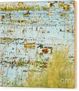 Sitting Ducks Wood Print