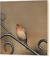Sitting Pretty Red House Finch Wood Print