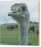 Six Flags Great Adventure - Animal Park - 121212 Wood Print