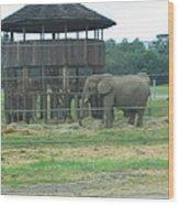 Six Flags Great Adventure - Animal Park - 121221 Wood Print