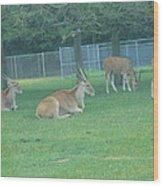 Six Flags Great Adventure - Animal Park - 121234 Wood Print