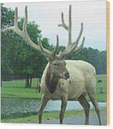 Six Flags Great Adventure - Animal Park - 12124 Wood Print
