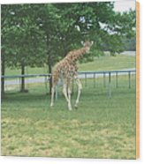 Six Flags Great Adventure - Animal Park - 121243 Wood Print