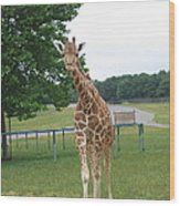 Six Flags Great Adventure - Animal Park - 121244 Wood Print