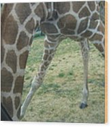 Six Flags Great Adventure - Animal Park - 121245 Wood Print by DC Photographer