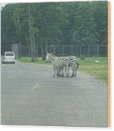 Six Flags Great Adventure - Animal Park - 121248 Wood Print by DC Photographer