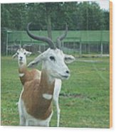 Six Flags Great Adventure - Animal Park - 121250 Wood Print
