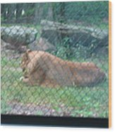 Six Flags Great Adventure - Animal Park - 121251 Wood Print