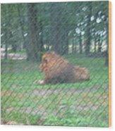 Six Flags Great Adventure - Animal Park - 121252 Wood Print