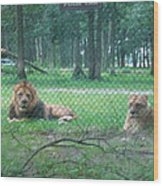 Six Flags Great Adventure - Animal Park - 121253 Wood Print