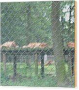 Six Flags Great Adventure - Animal Park - 121254 Wood Print