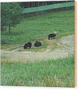 Six Flags Great Adventure - Animal Park - 121255 Wood Print