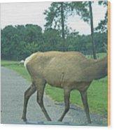 Six Flags Great Adventure - Animal Park - 12126 Wood Print