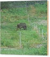 Six Flags Great Adventure - Animal Park - 121260 Wood Print